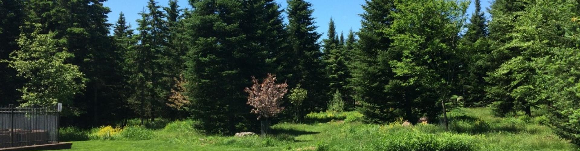 Lawn and Landscape Blog (part 6)
